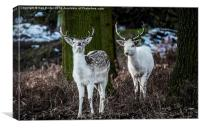 Are you posing my Deer?, Canvas Print