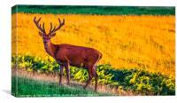Hello Deer, Canvas Print
