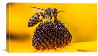Pollen Hunting, Canvas Print