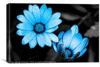 Sky Blue Petals, Canvas Print