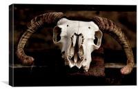 Sheep Skull, Canvas Print