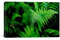 Green Fern, Canvas Print