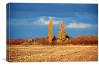 Autumnal yellow trees, Canvas Print
