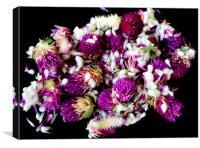 Purple dried clover, Canvas Print