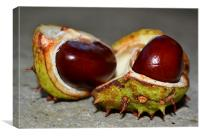 Double Conker, Canvas Print