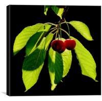 Sunlit Cherries, Canvas Print