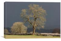 Sunlit Tree against Dark Sky, Canvas Print