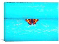 Butterfly- Unique Photography, Canvas Print