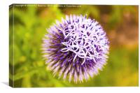 Purple Allium, Canvas Print