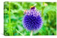 Mine! Honey Bee And Bumble Bee Fight Over Flower , Canvas Print
