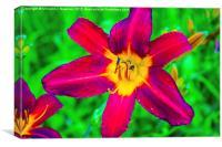 Scarlet Daylily , Canvas Print