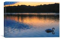 Swan At Sunset, Whitlingham, Norwich, England, Canvas Print