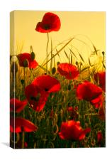Simply Poppies, Canvas Print