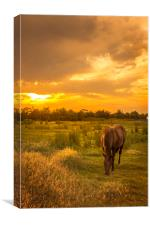 Horse at Sunset, Canvas Print