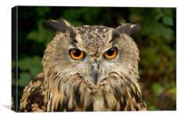 Eurasian Eagle Owl, Canvas Print