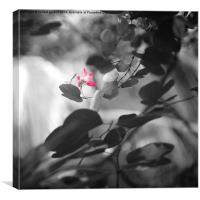 Pink tropical flower, Canvas Print