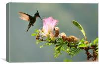 Caribbean Hummingbird, Canvas Print