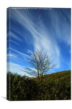 Lone Tree in Colour , Canvas Print