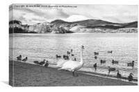 Loch Lomond Swans and Ducks, Canvas Print