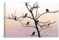The Posing Tree, Canvas Print
