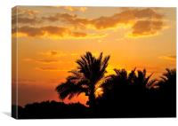 Egyptian Date Palms, Canvas Print