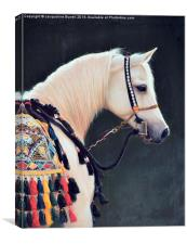 An Arabian Horse, Canvas Print