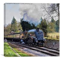 Bittern Leaving Crowcombe Heathfield 2, Canvas Print