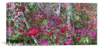 Bougainvillea, Canvas Print