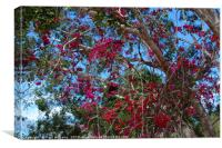 Bougainvillea  2, Canvas Print