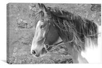 Tontos Horse, Canvas Print