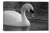 Swan Lake 2, Canvas Print