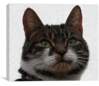 Oil Cat, Canvas Print