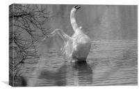 Swan Stretching, Canvas Print