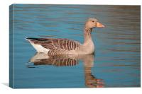 Reflecting Goose, Canvas Print