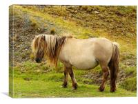 Pony in the Black Mountain, Canvas Print