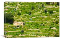 Disused Terraces on Sicily, Canvas Print