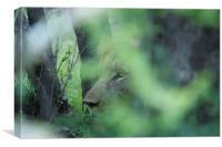 Hiding In The Bush..., Canvas Print