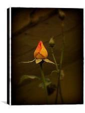 Timeless Rose, Canvas Print