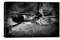 Creeping Roots, Canvas Print