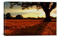 Corn Field Shadow, Canvas Print
