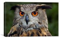 Eagle owl portrait, Canvas Print