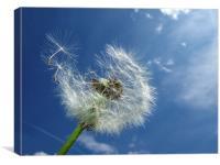Dandelion and blue sky, Canvas Print