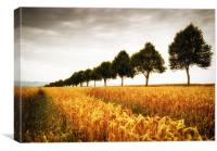 Golden cornfield and trees, Canvas Print
