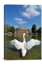 Swan spreads wings in Stuttgart, Canvas Print