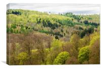 Shades of green - spring forest, Canvas Print