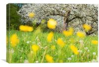 Spring meadow with yellow flowers, Canvas Print