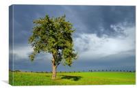 Tree green meadow dramatic sky, Canvas Print