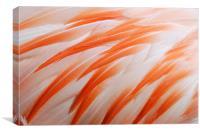 Flamingo feathers orange and white, Canvas Print