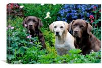 pretty garden and dogs, Canvas Print