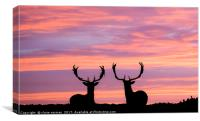 stags at sunset, Canvas Print